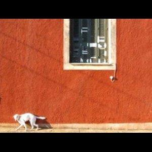"""画像3: Gustav Deutsch """"Not Home. Picturing the Foreign"""" [PAL DVD]"""