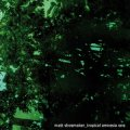 "Matt Shoemaker ""Tropical Amnesia One"" [CD]"