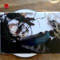 "Artificial Memory Trace ""Animisti Totema"" [CD-R]"