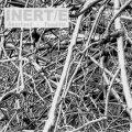 """INERT/E (Kasper T Toeplitz, Lars Akerlund) """"Congruences Contrariees"""" [CD]"""